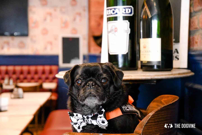 My Dog-friendly London Clapham & Battersea By Hemingway The Pug Le Pot Lyonnais 1