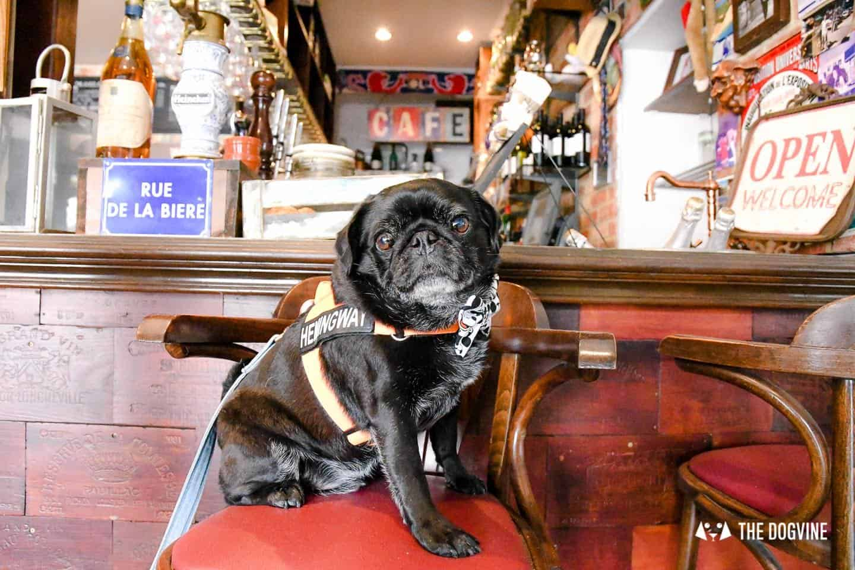 My Dog-friendly London Clapham & Battersea By Hemingway The Pug Le Pot Lyonnais 3