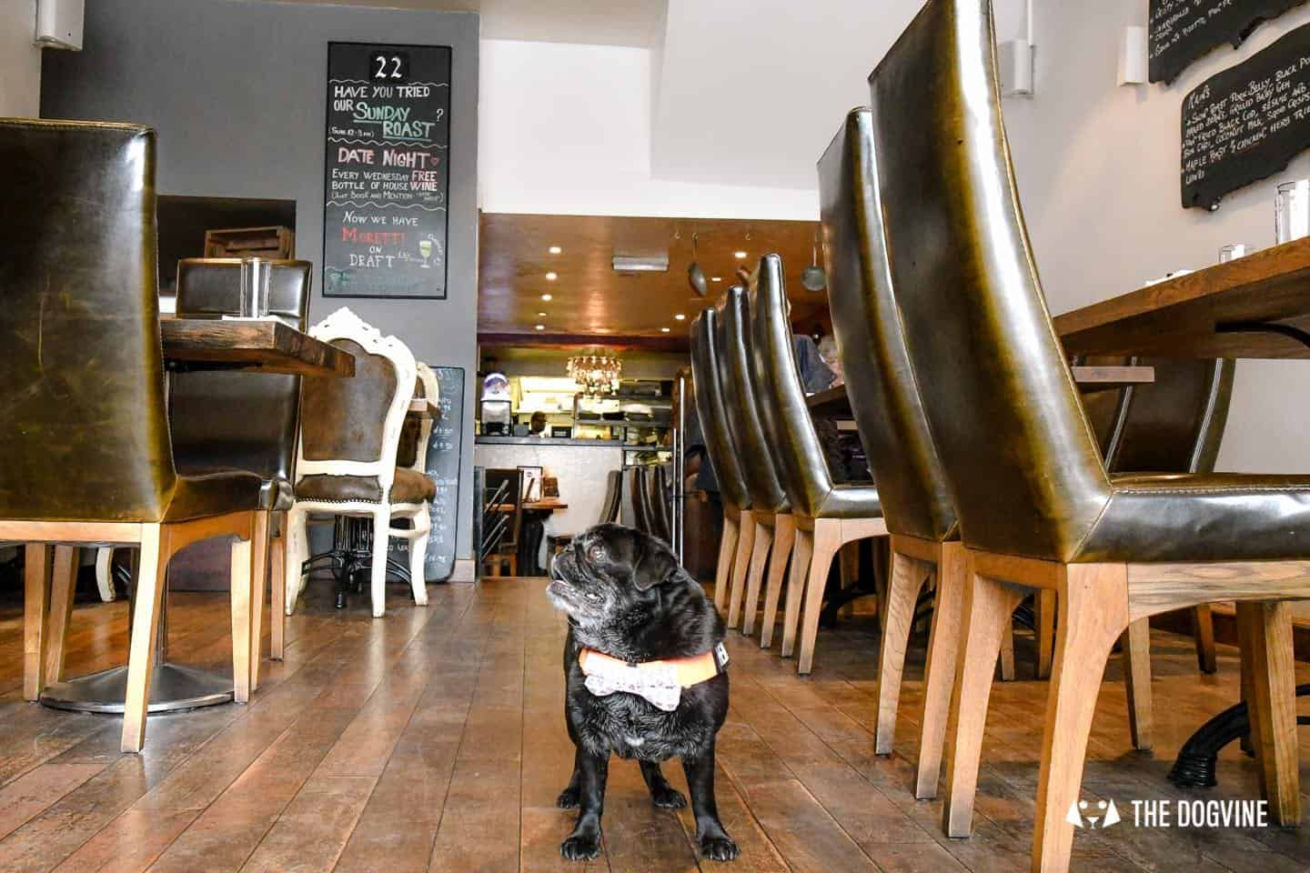 My Dog-friendly London Clapham & Battersea By Hemingway The Pug Number 22 North Street 1