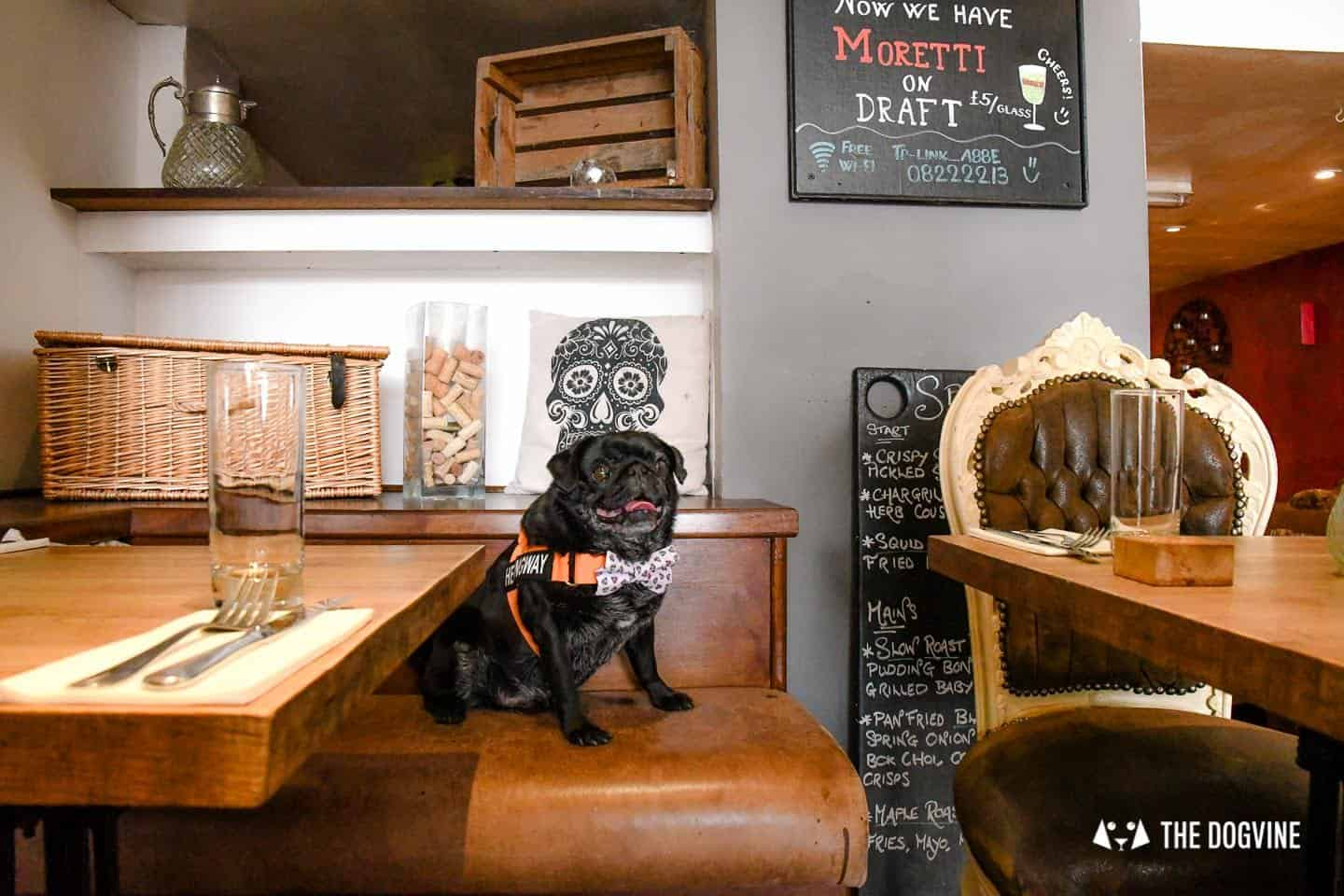 My Dog-friendly London Clapham & Battersea By Hemingway The Pug Number 22 North Street 2