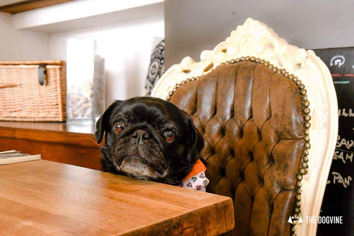 My Dog-friendly London Clapham & Battersea By Hemingway The Pug Number 22 North Street 3