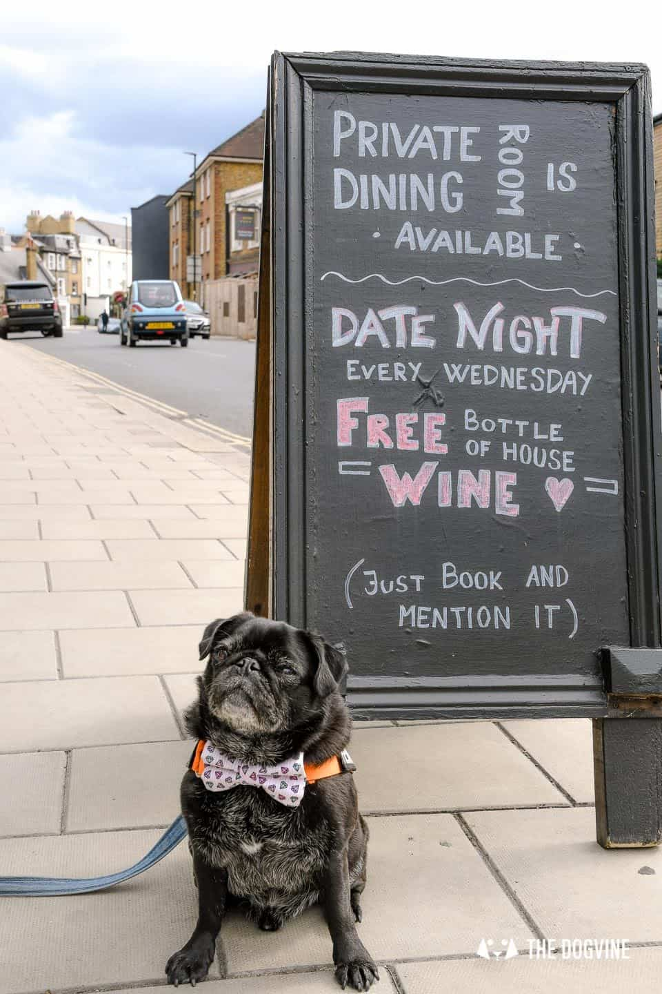My Dog-friendly London Clapham & Battersea By Hemingway The Pug Number 22 North Street 4