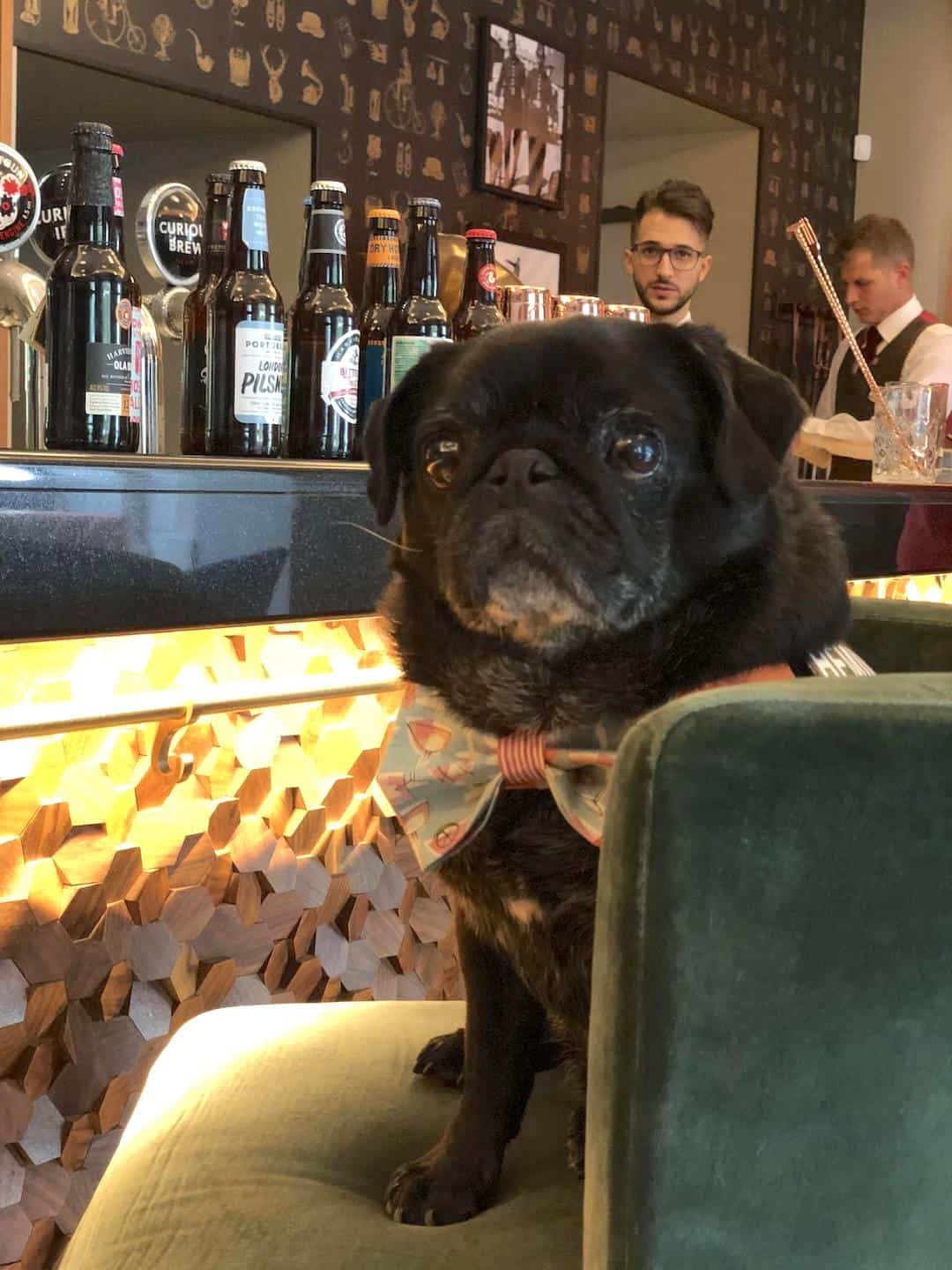 My Dog-friendly London Clapham & Battersea By Hemingway The Pug Smith & Whistle 1