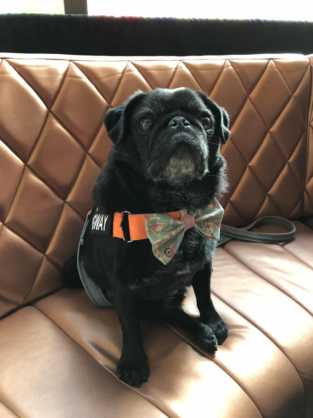 My Dog-friendly London Clapham & Battersea By Hemingway The Pug Smith & Whistle 2