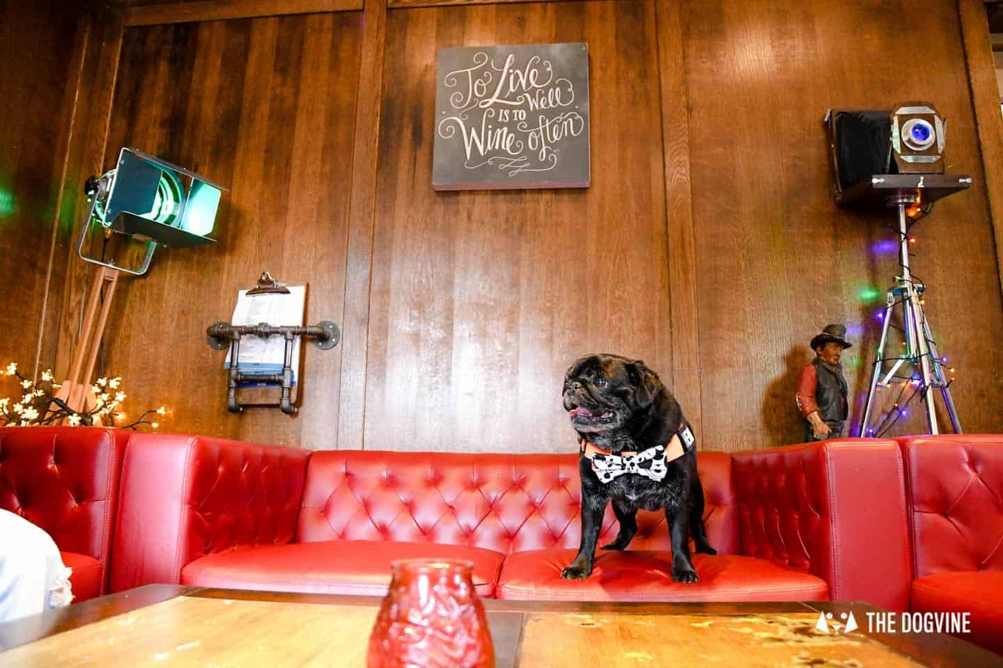 My Dog-friendly London Clapham & Battersea By Hemingway The Pug The Clapham Tap 1