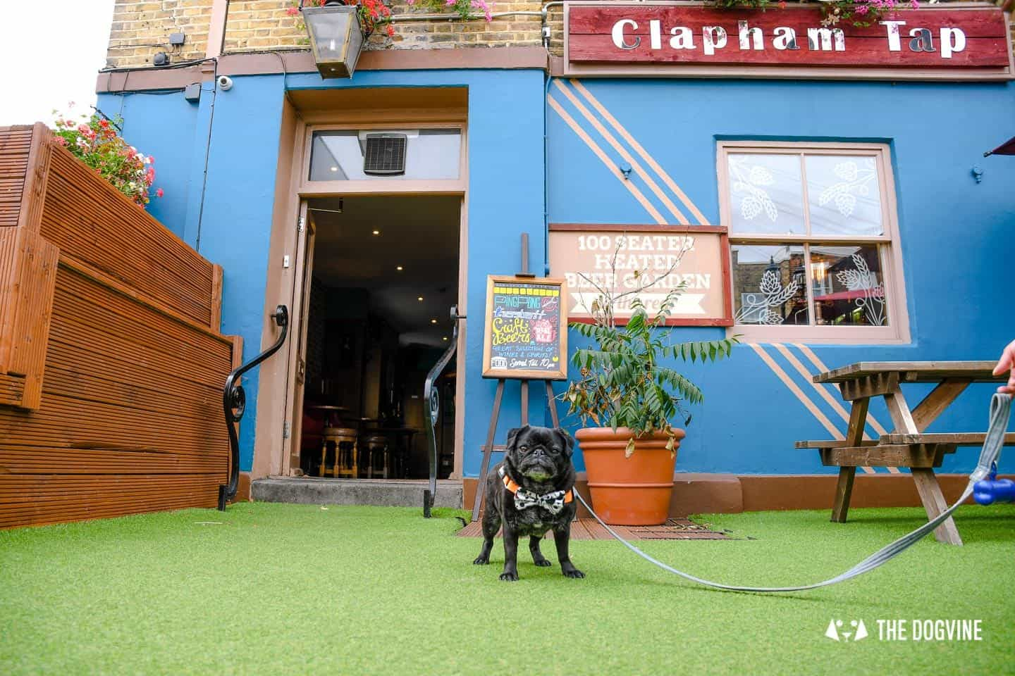 My Dog-friendly London Clapham & Battersea By Hemingway The Pug The Clapham Tap 8