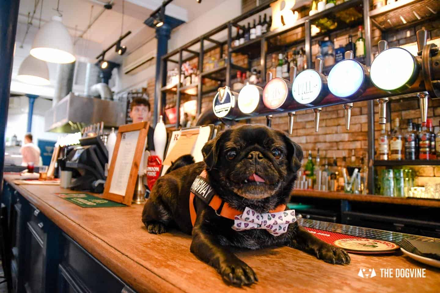 My Dog-friendly London Clapham & Battersea By Hemingway The Pug The Rectory 12
