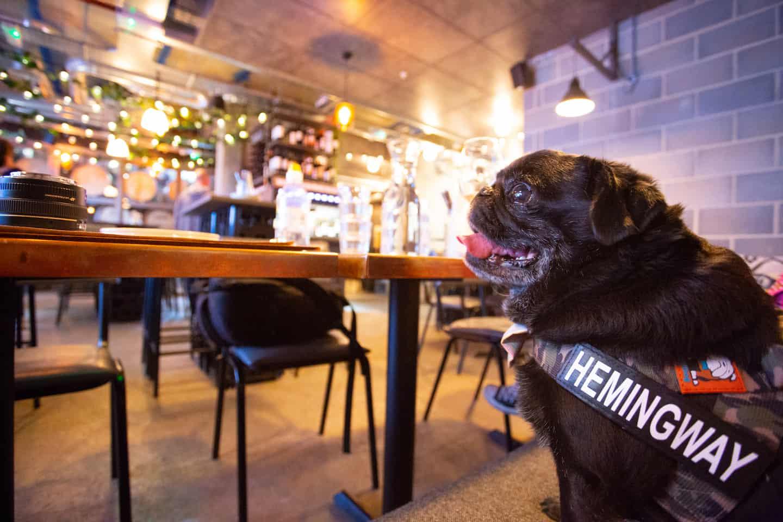 My Dog-friendly London Clapham & Battersea By Hemingway The Pug Vagabond Wines 1