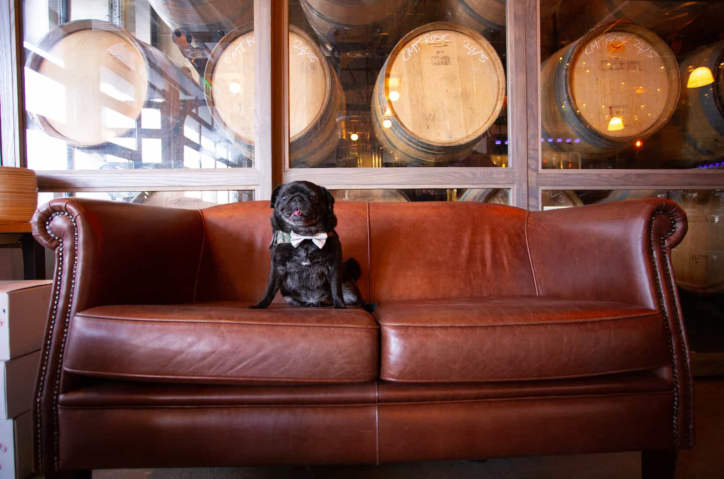 My Dog-friendly London Clapham & Battersea By Hemingway The Pug Vagabond Wines 4