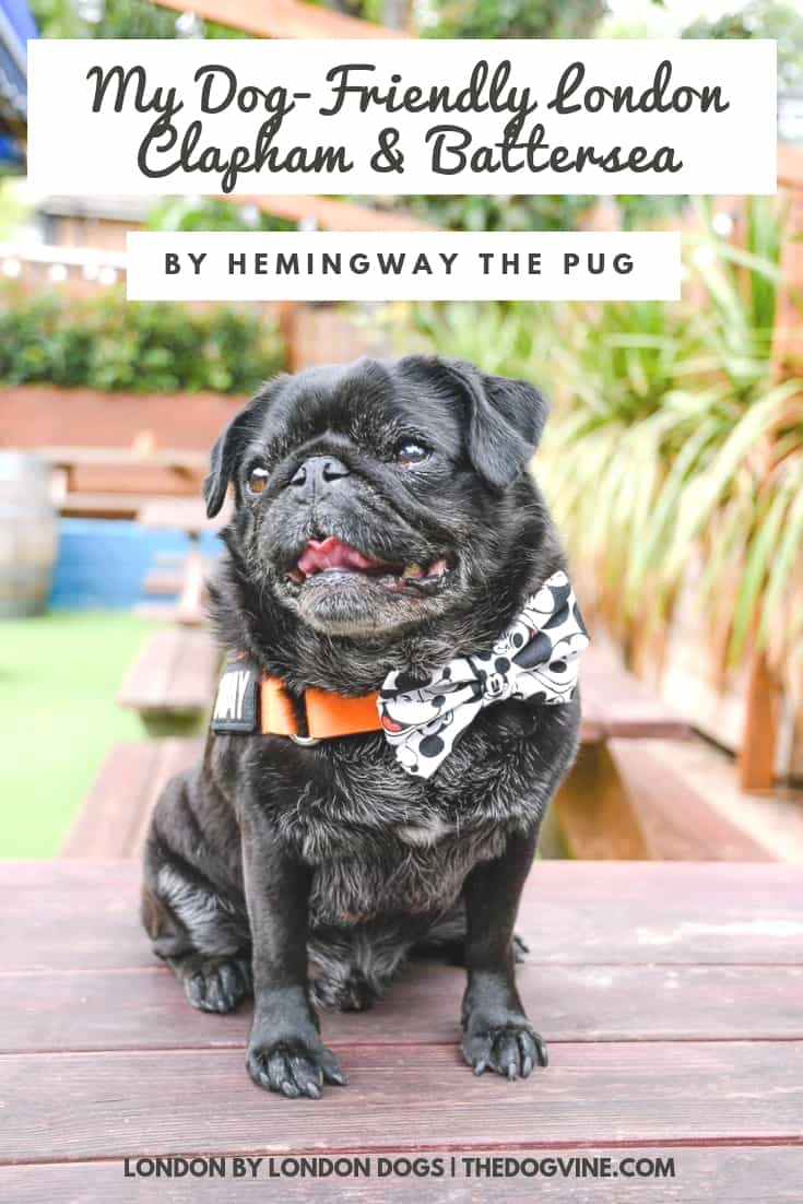 My Dog-friendly London Clapham & Battersea Guide By Hemingway the Pug