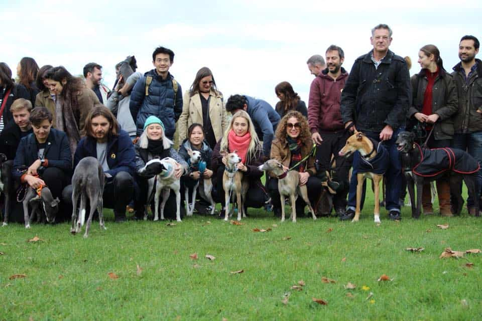 Sighthound Sundays Festive Walk