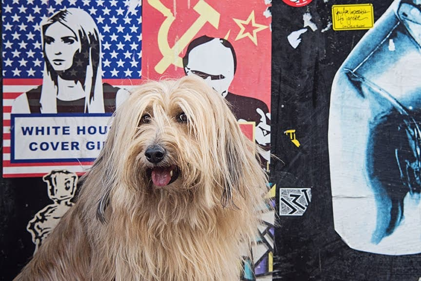 The Dogvine Guide To A Shoreditch Street Art Dog Walk 10