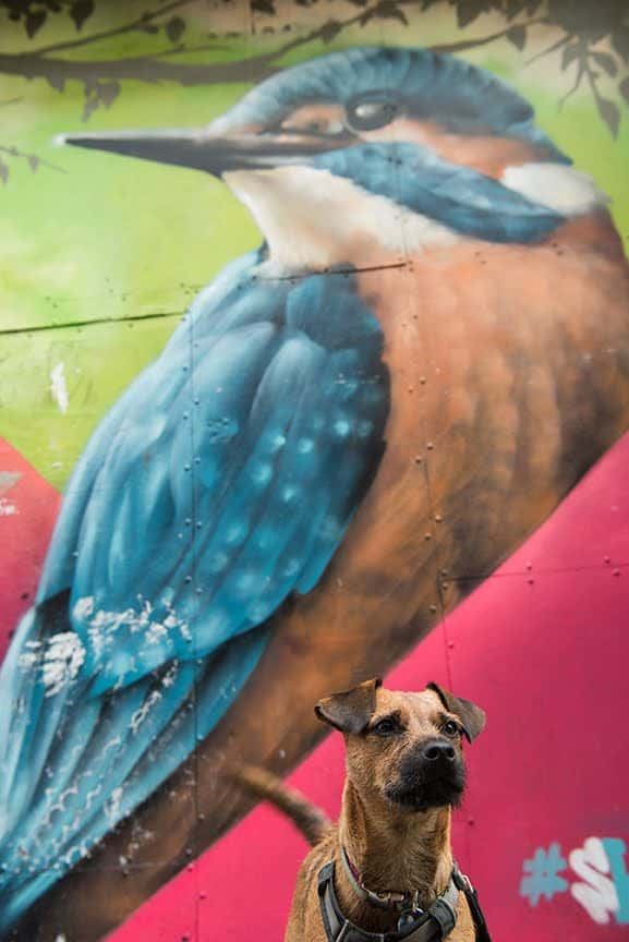 The Dogvine Guide To A Shoreditch Street Art Dog Walk 13