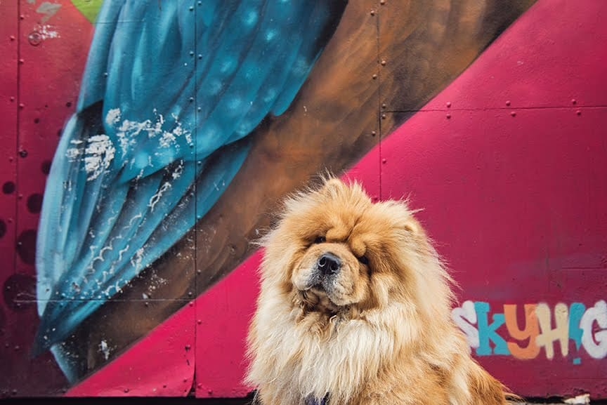 The Dogvine Guide To A Shoreditch Street Art Dog Walk 14