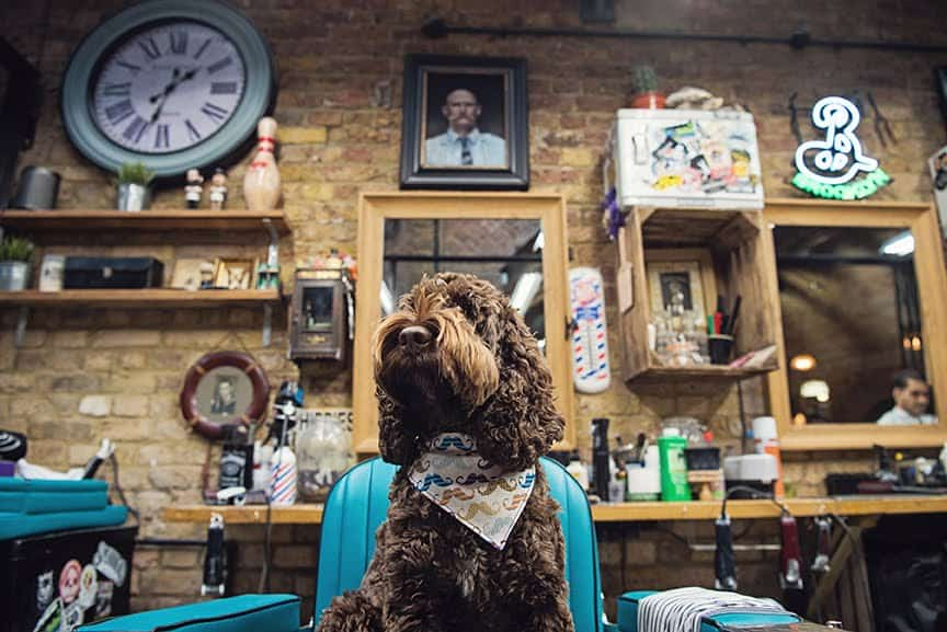The Dogvine Guide To A Shoreditch Street Art Dog Walk 18