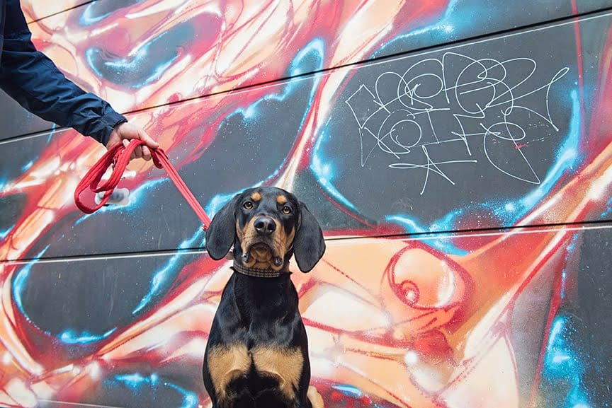 The Dogvine Guide To A Shoreditch Street Art Dog Walk 4