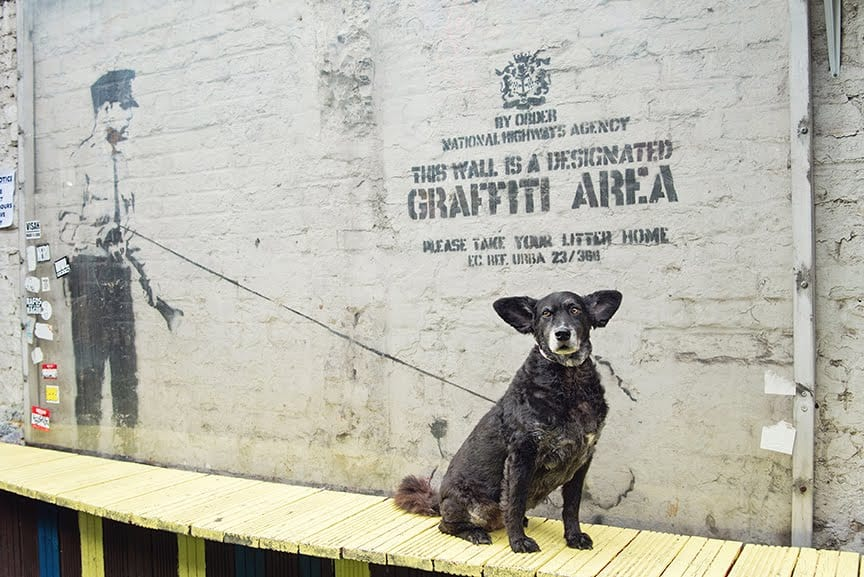 The Dogvine Guide To A Shoreditch Street Art Dog Walk - Cargo Rivington Street - Banksy - Belinha
