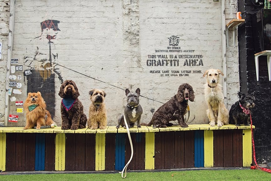 The Dogvine Guide To A Shoreditch Street Art Dog Walk Cargo Rivington Street Banksy