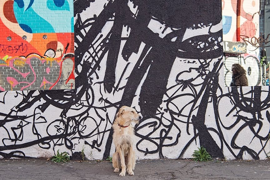 The Dogvine Guide To A Shoreditch Street Art Dog Walk - Chance Street