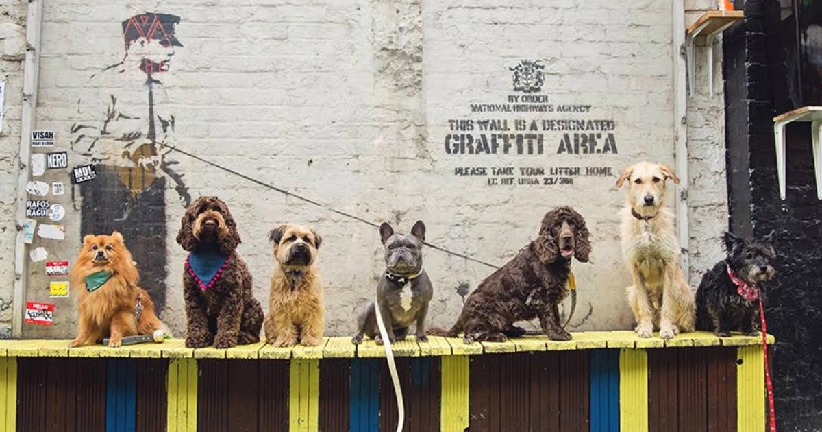 The Dogvine Guide To A Shoreditch Street Art Dog Walk