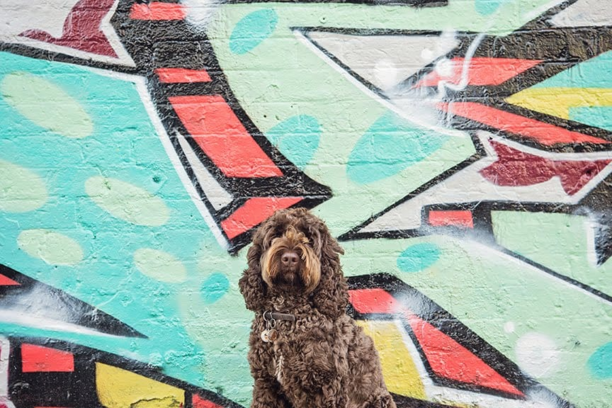 The Dogvine Guide To A Shoreditch Street Art Dog Walk - Sclater Street. - Barnaby