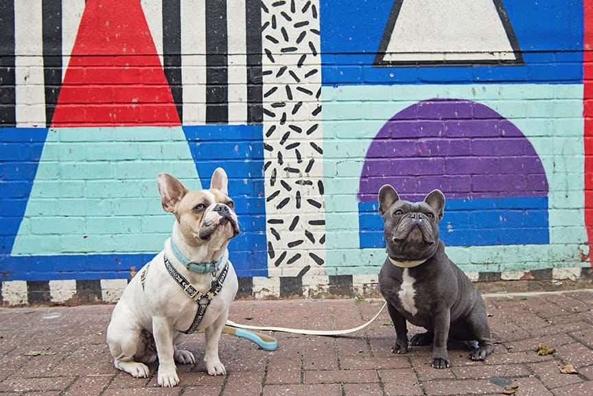 The Dogvine Guide To A Shoreditch Street Art Dog Walk - Whitby Street - Herbie and Dave