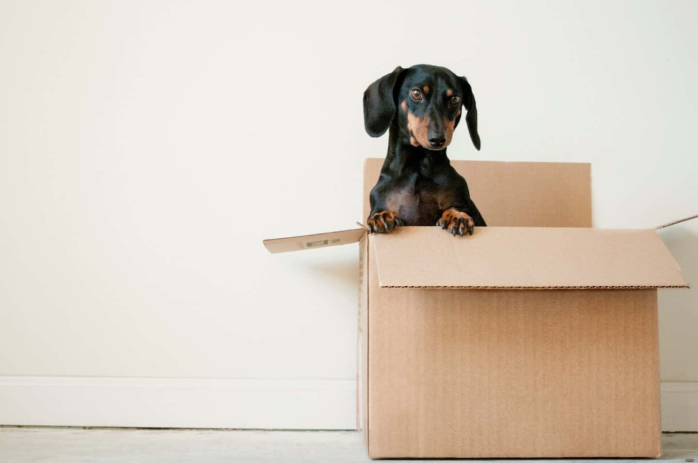 The Ultimate Guide to Renting With a Dog In London - Dachshund in a box