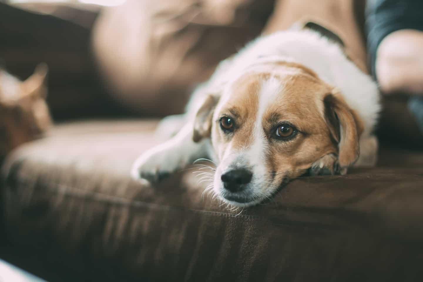 The Ultimate Guide to Renting With a Dog In London - Dog and Owner on the sofa