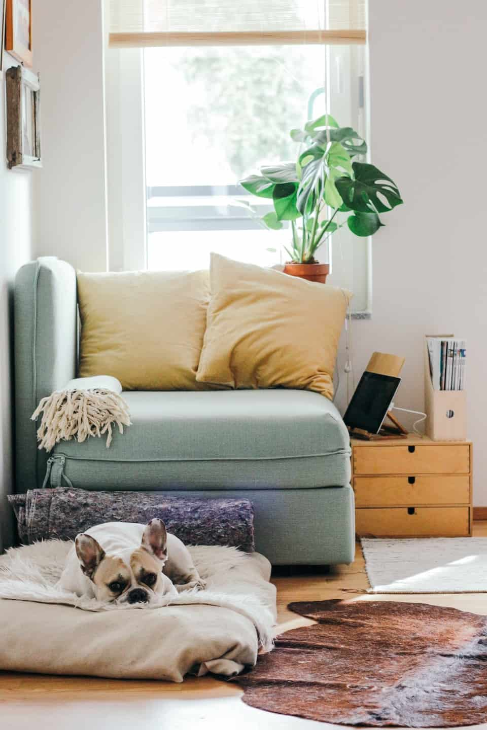 The Ultimate Guide to Renting With a Dog In London - Dog in the Lounge