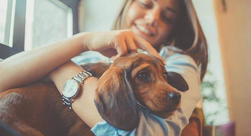 The Ultimate Guide to Renting With a Dog In London - Essential Living Lets With Pets