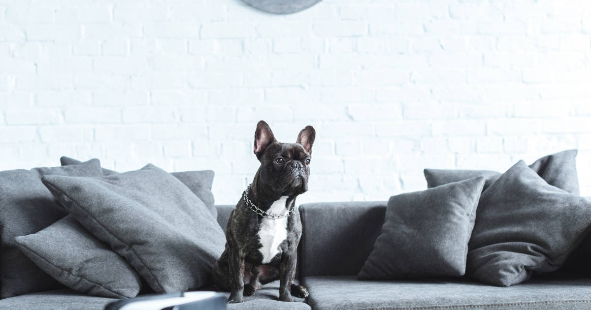 Renting With A Dog In London | The Ultimate Guide