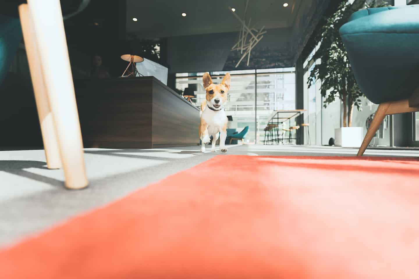 The Ultimate Guide to Renting With a Dog In London - Tipi Dog-Friendly Apartments