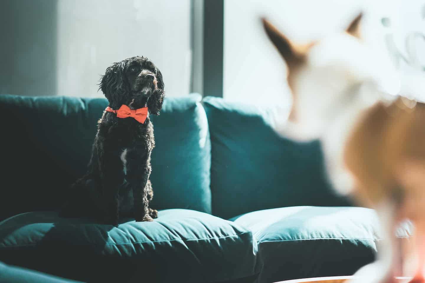 The Ultimate Guide to Renting With a Dog In London - Tipi Dog Interviews