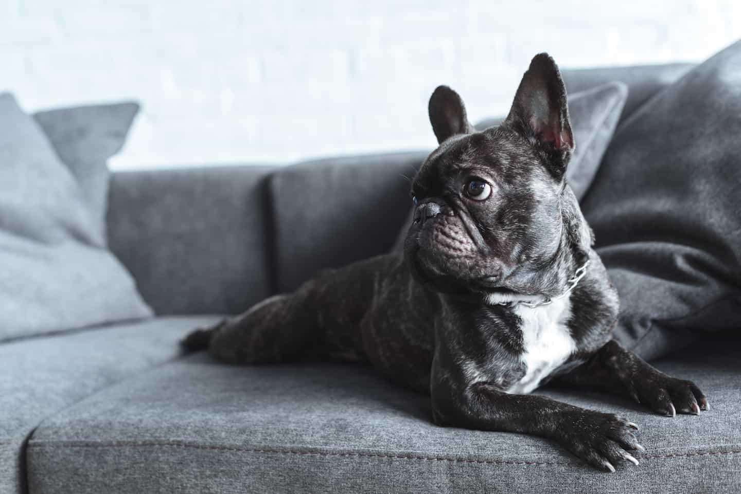 The Ultimate Guide to Renting With a Dog In London