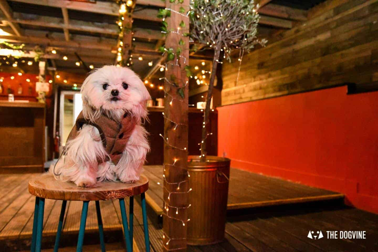 5 Reasons To Go To The Dog-friendly Bussey Rooftop Bar This Winter 11