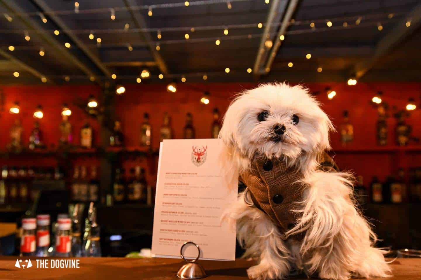 5 Reasons To Go To The Dog-friendly Bussey Rooftop Bar This Winter 12