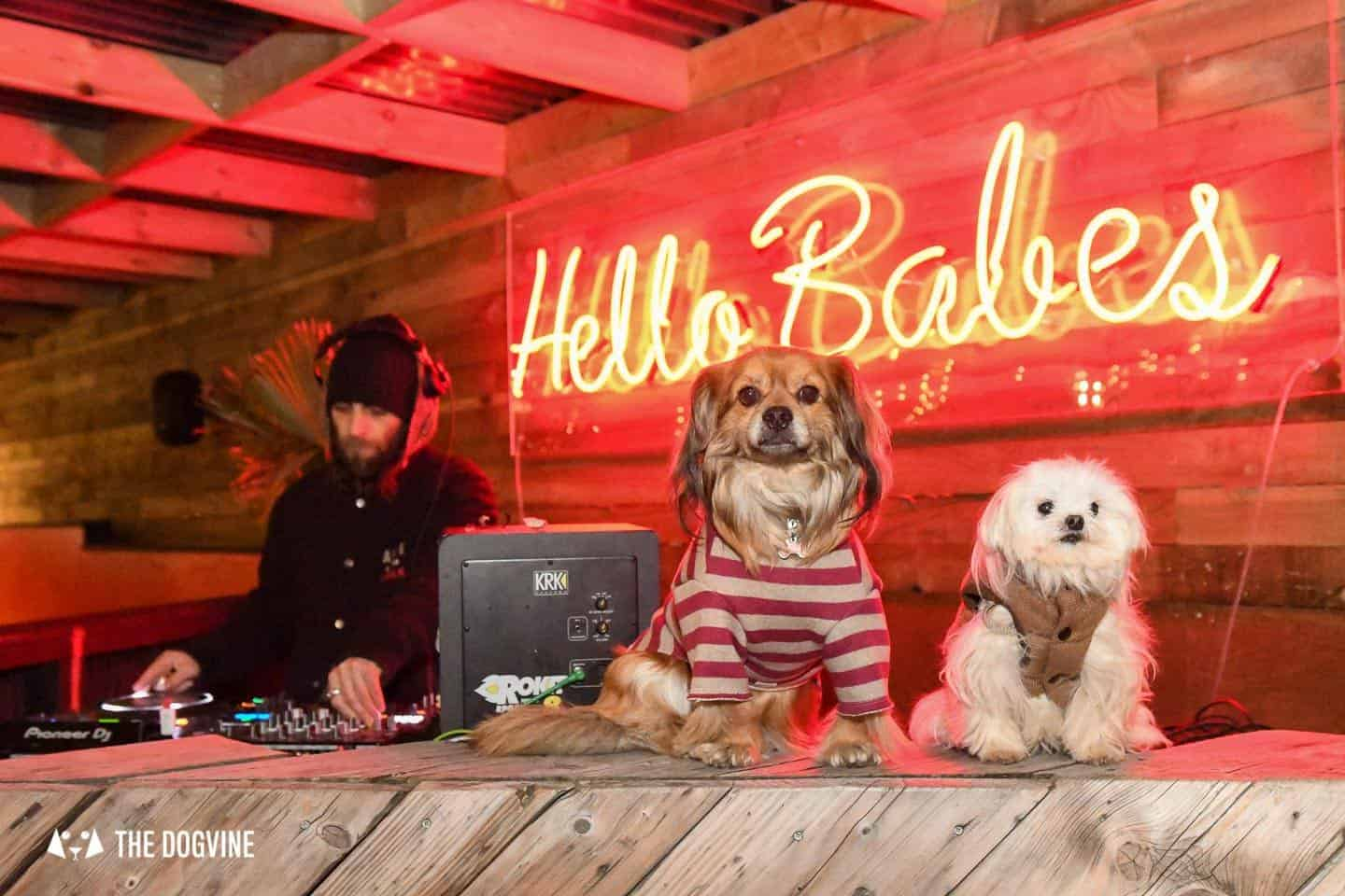 5 Reasons To Go To The Dog-friendly Bussey Rooftop Bar This Winter 16