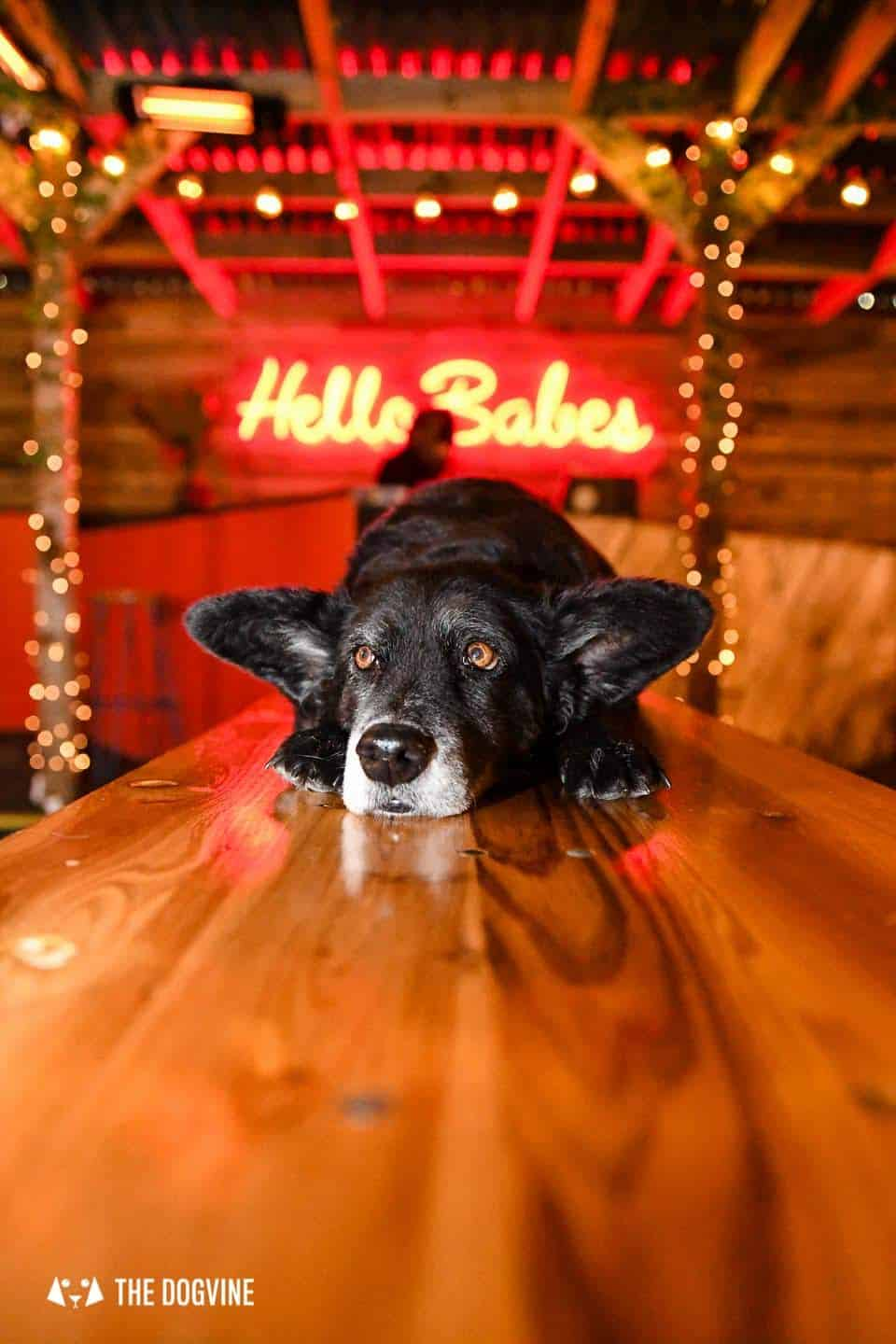 5 Reasons To Go To The Dog-friendly Bussey Rooftop Bar This Winter 19