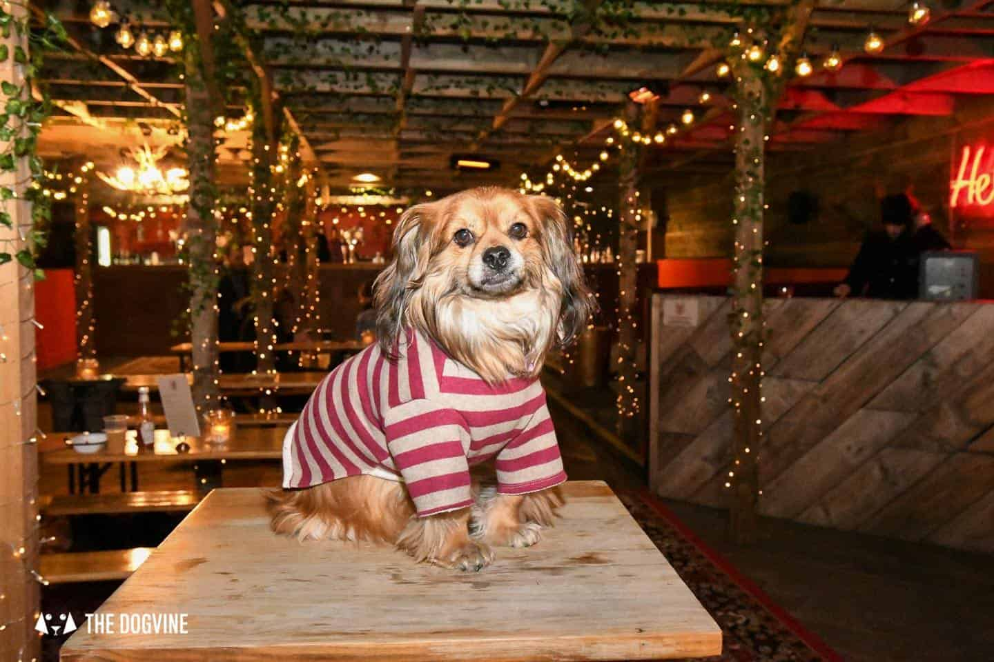 5 Reasons To Go To The Dog-friendly Bussey Rooftop Bar This Winter 2