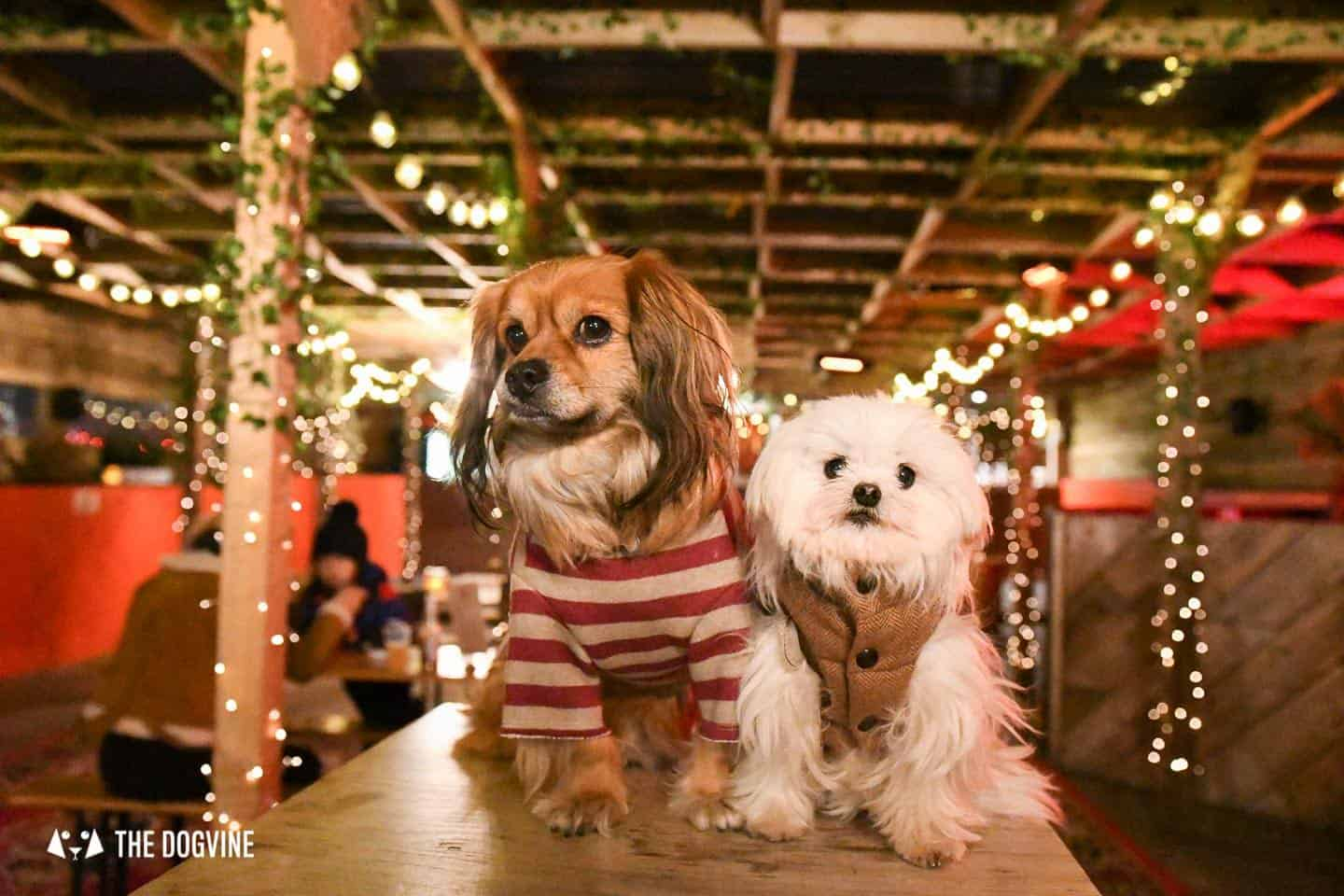 5 Reasons To Go To The Dog-friendly Bussey Rooftop Bar This Winter 20