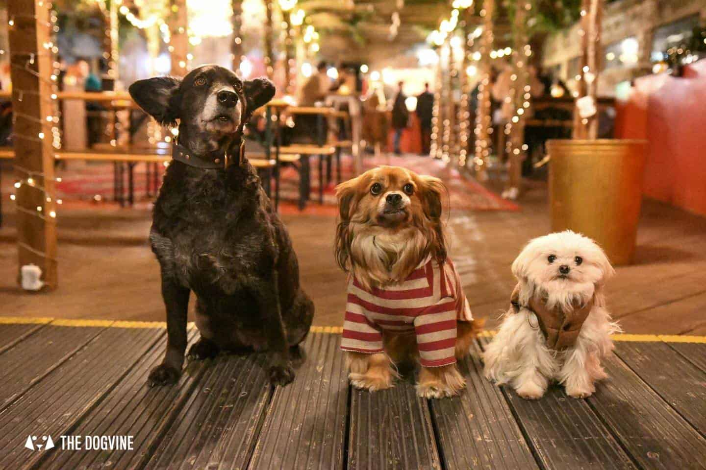 5 Reasons To Go To The Dog-friendly Bussey Rooftop Bar This Winter Belinha, Morri & Lilliput