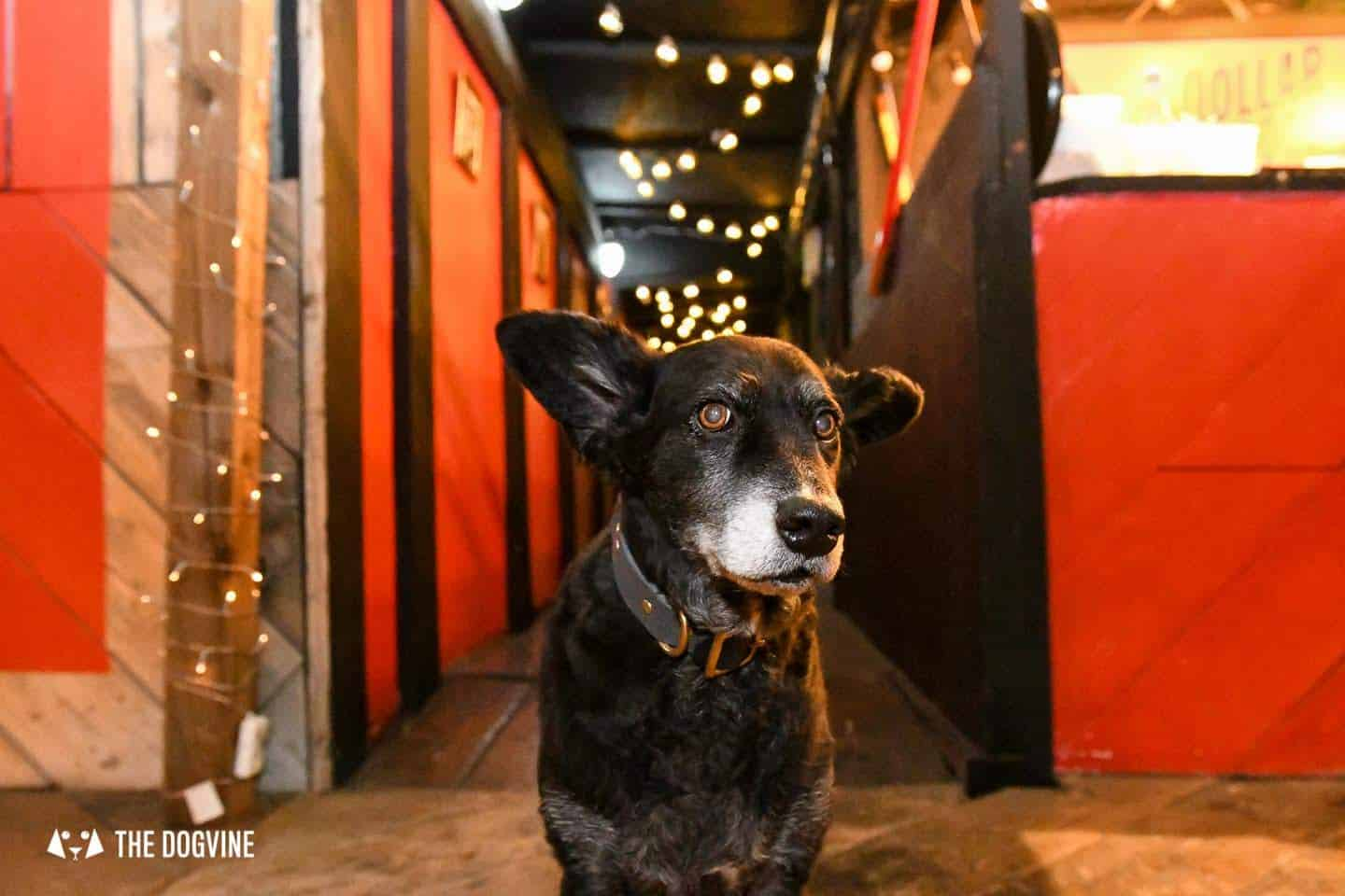 5 Reasons To Go To The Dog-friendly Bussey Rooftop Bar This Winter 23