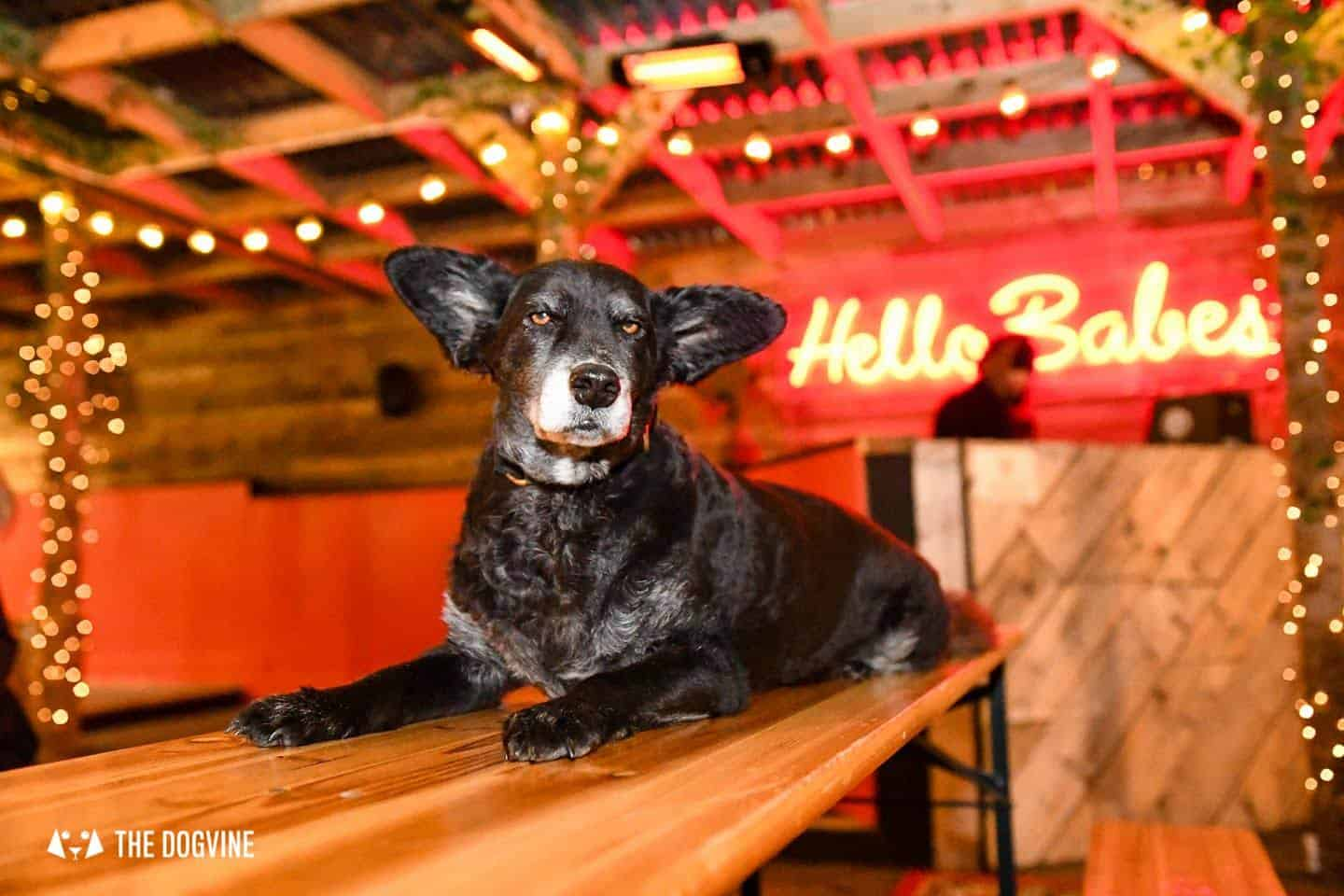 5 Reasons To Go To The Dog-friendly Bussey Rooftop Bar This Winter 25