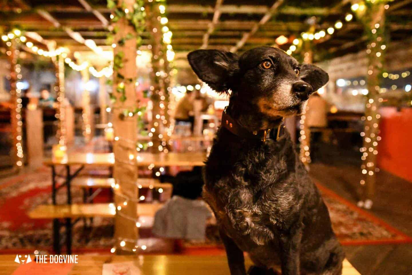 5 Reasons To Go To The Dog-friendly Bussey Rooftop Bar This Winter 3