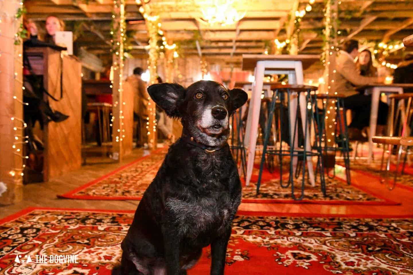 5 Reasons To Go To The Dog-friendly Bussey Rooftop Bar This Winter 5