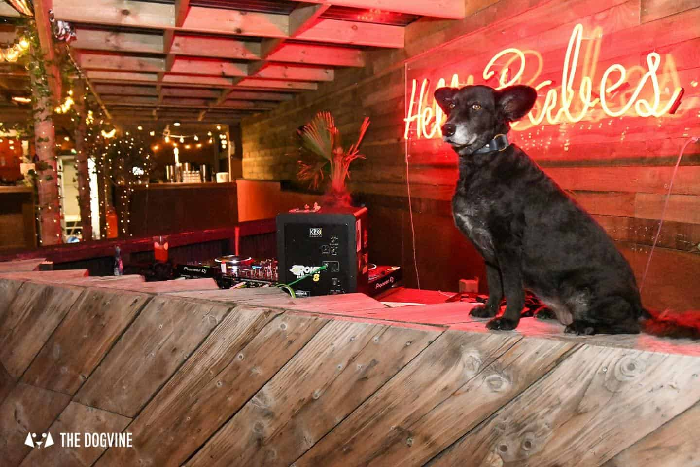 5 Reasons To Go To The Dog-friendly Bussey Rooftop Bar This Winter 6