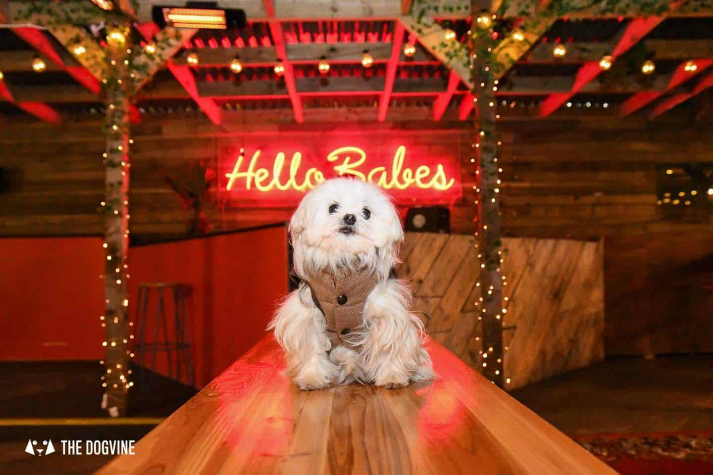 5 Reasons To Go To The Dog-friendly Bussey Rooftop Bar This Winter 8