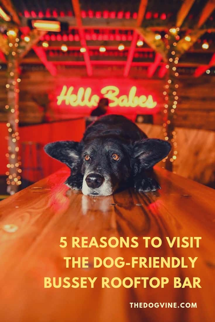 5 Reasons To Go To The Dog-friendly Bussey Rooftop Bar This Winter