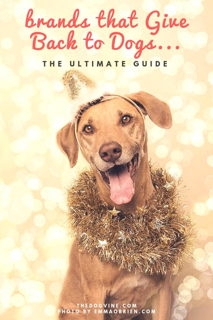 Brands that Give Back to Dogs - The Ultimate Guide