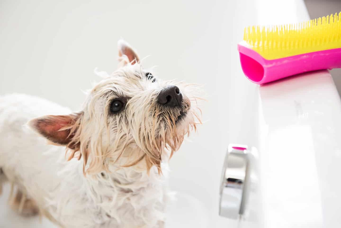 Brands That Give Back To Dogs - Pet Teezer